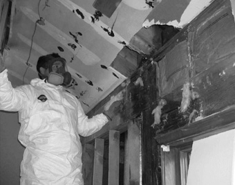 Paris Mold Removal